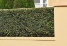 Asquith Privacy fencing 28